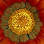flower-spores_9371_600x450