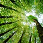 hhc_stockphoto_trees