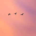 abstract-silhouette-birds-flying-beautiful-sunset-sky-photograph-59908197