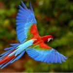 beautiful-birds-flying-in-the-sky-wallpaper-3